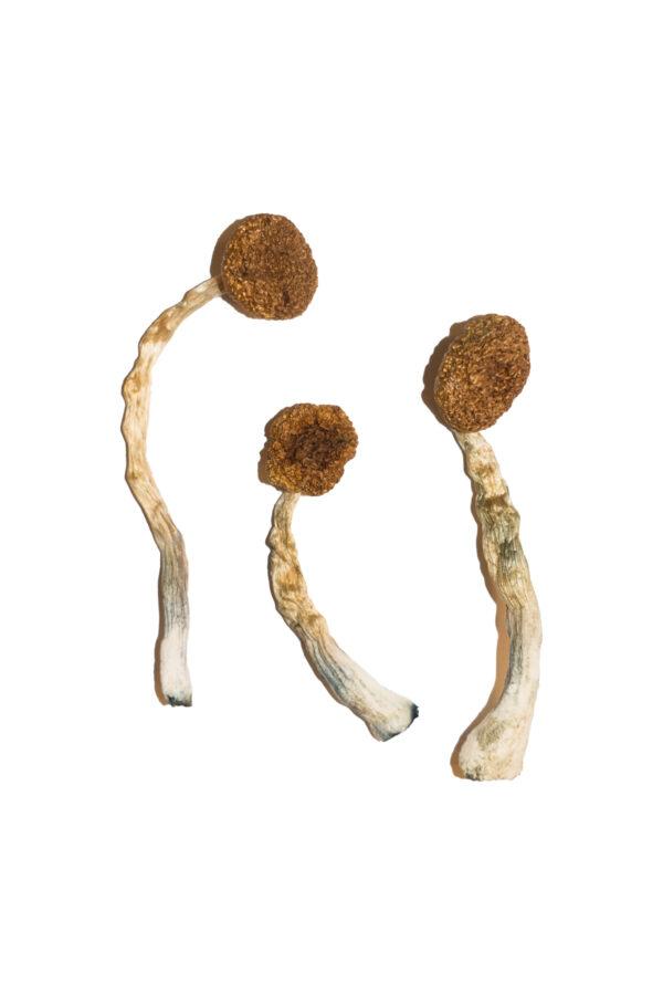 Treasure Coast Magic Mushrooms